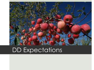 DD Expectations