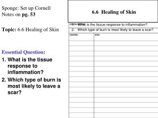 Sponge: Set up Cornell Notes on  pg.  53 Topic:  6.6 Healing of Skin Essential Question :
