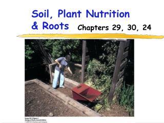 Soil, Plant Nutrition & Roots