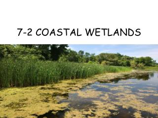 7-2 COASTAL WETLANDS