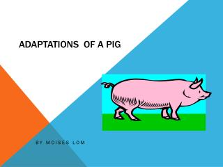 Adaptations  of a Pig