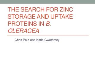 The Search for Zinc Storage and Uptake Proteins in  B.  oleracea