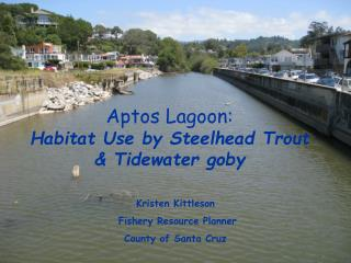 Aptos Lagoon:  Habitat Use by Steelhead Trout & Tidewater goby