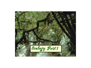 Ecology  Part 1