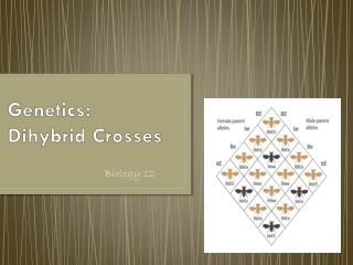 Genetics:  Dihybrid Crosses