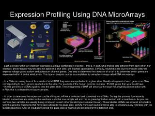 Expression Profiling Using DNA  MicroArrays