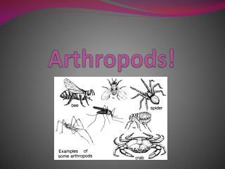 Arthropods!