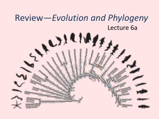 Review� Evolution and Phylogeny