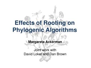 Effects of Rooting on  Phylogenic Algorithms