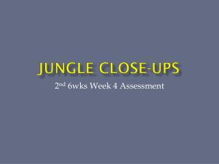 Jungle Close-ups