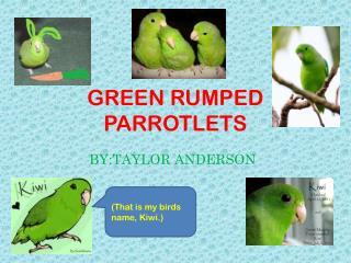 GREEN RUMPED PARROTLETS