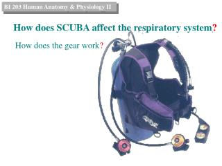 How does SCUBA affect the respiratory system ?