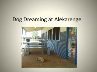 Dog Dreaming at  Alekarenge