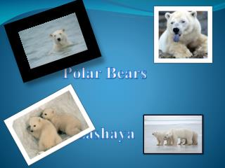 Polar  Bears Lashaya