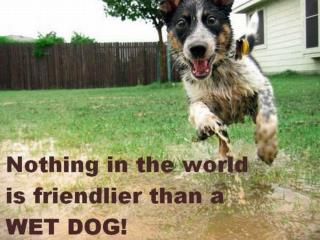 Sometimes a dog is  a  man's best, and  only  friend. Actually,  there  are many