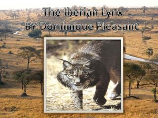 The Iberian Lynx BY:Dominique Pleasant