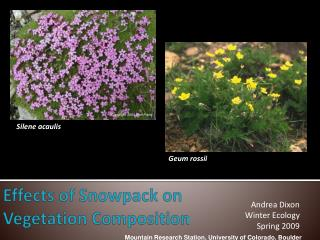 Effects of Snowpack on Vegetation Composition