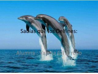 Sabías que los Delfines: