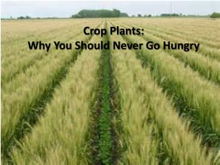 Crop Plants: Why You Should Never Go Hungry