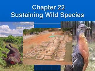Chapter 22 Sustaining Wild Species