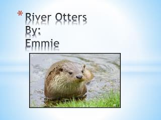 River Otters By: Emmie