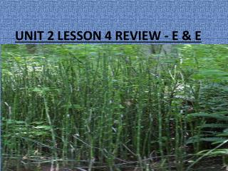 UNIT 2 LESSON 4 REVIEW - E & E