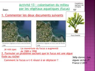 Activité 13 : colonisation du milieu par les végétaux aquatiques (fucus)