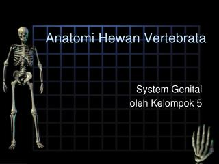 Anatomi Hewan  Vertebrata