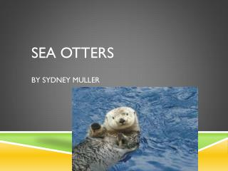 Sea  Otters By Sydney Muller