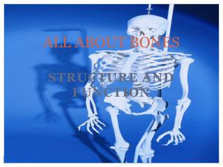 ALL ABOUT BONES