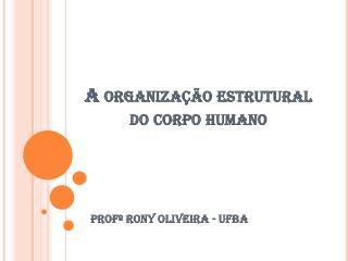 A organização estrutural do corpo humano
