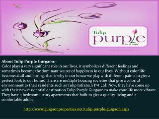 Tulip Purple in Gurgaon