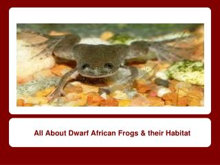 All About Dwarf African Frogs & their Habitat