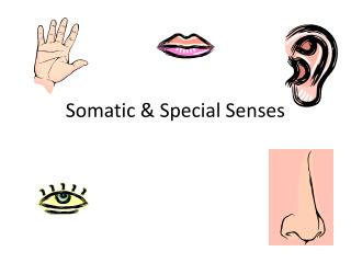 Somatic & Special Senses