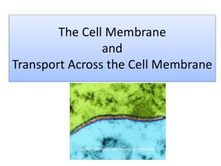 The Cell Membrane  and  Transport Across the Cell Membrane