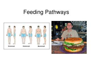 Feeding Pathways