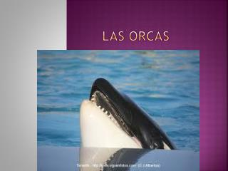 Las orcas