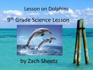 Lesson on Dolphins