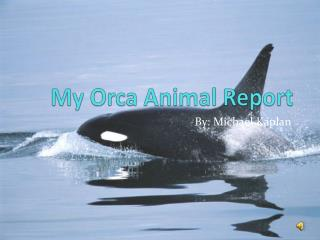 My Orca Animal Report