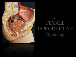The FEMALE  REPRODUCTIVE  Physiology