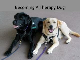 Becoming A Therapy Dog