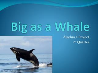 Big as a Whale