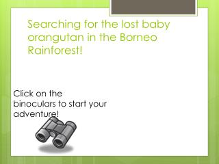 Searching for the lost baby  orangutan  in the Borneo Rainforest!