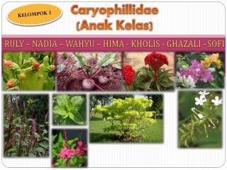 Caryophillidae (Anak Kelas)