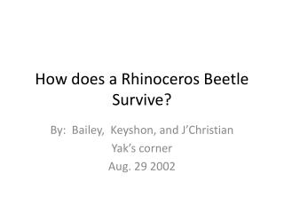 How does a Rhinoceros Beetle Survive?