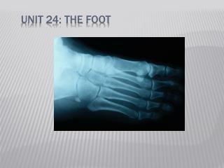 Unit 24: The  Foot