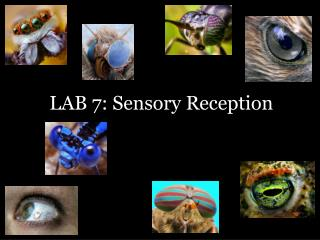 LAB  7 :  Sensory Reception