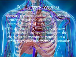 50.1 Sensory receptors
