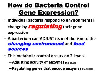 How do Bacteria Control Gene Expression?