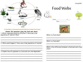 Food Webs Name: ____________________#_____ Date:______________